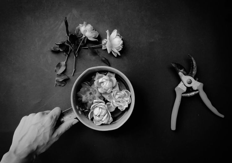 Cropped hand of person holding flowers in container on table