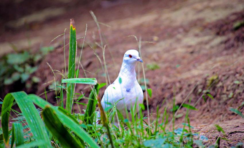 Bird Plant Land