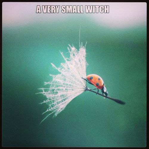 Wishflowers Ladybug Verysmallwitch Witch broomstick flying nature humor funny magic wiccan