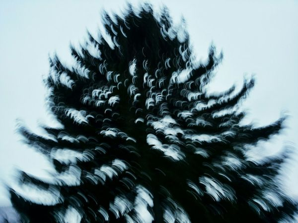 RePicture Growth Experimenting... Experimental Experiments Tree Treescollection Licht Und Schatten Contrast Silhouette Silhouette_collection Minimalism Minimalobsession Experiment Impressionism Abstract Verwackelt Verwischt Verwischtes Bild Unsharp Unscharf Minimalist
