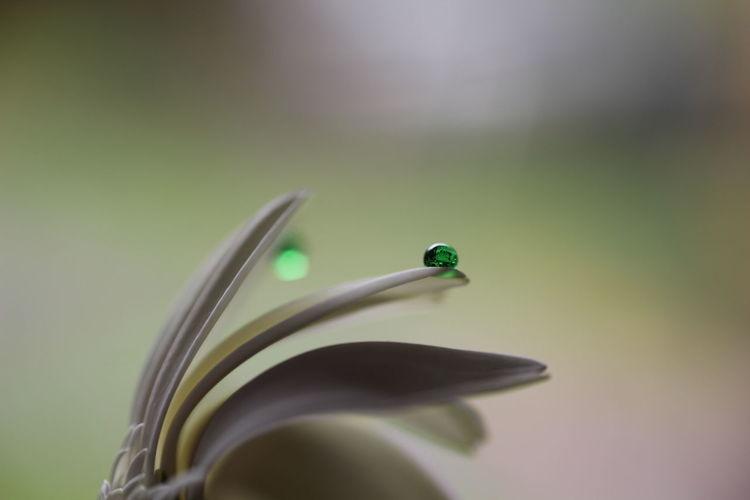 Close-up of water drop on petal