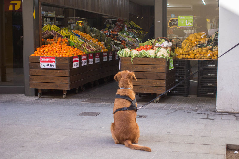 Barcelona Catalonia Catalunya Dog Watching Gazing Prices Rear View SPAIN Supermarket Animal Themes Day Dog Domestic Animals Expensive Food Fruits Jumble Sale No People Pets Shop Store Vegetable