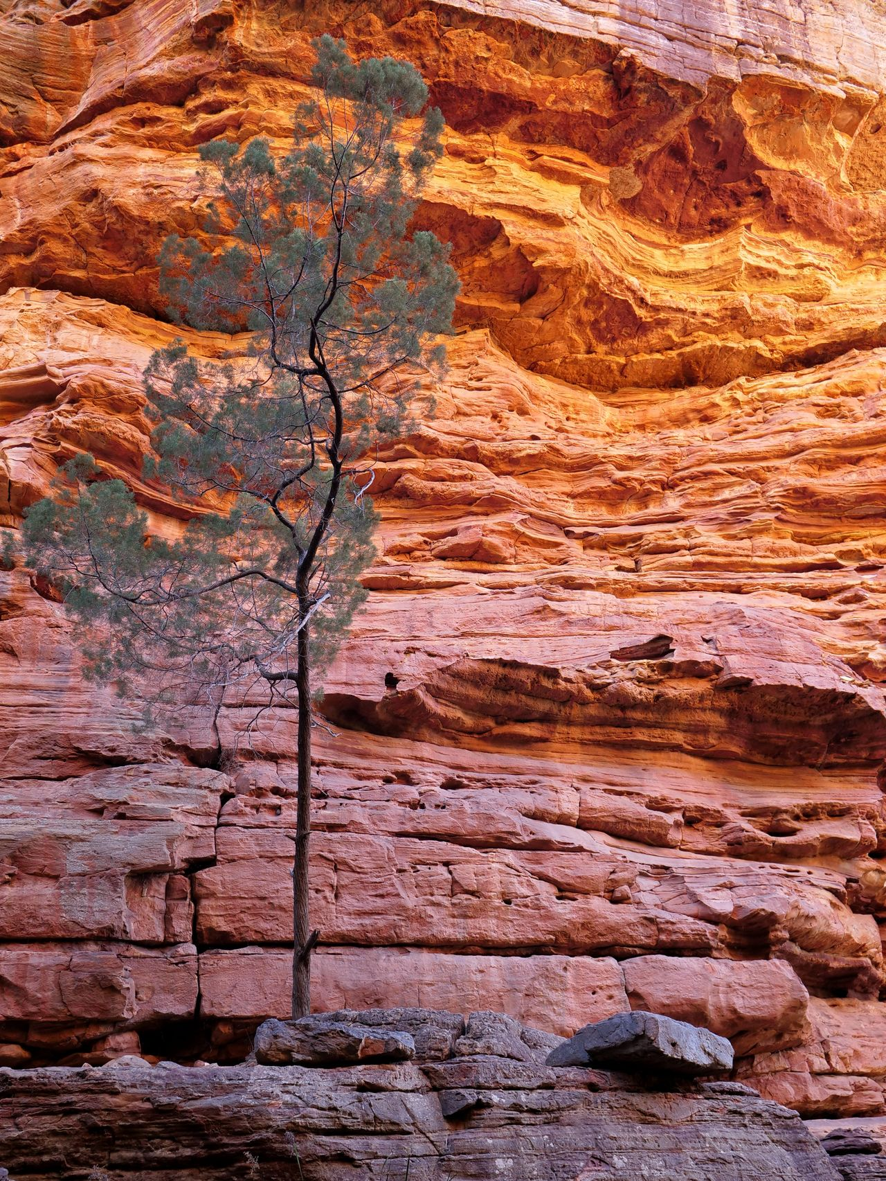 Tree against rock formations