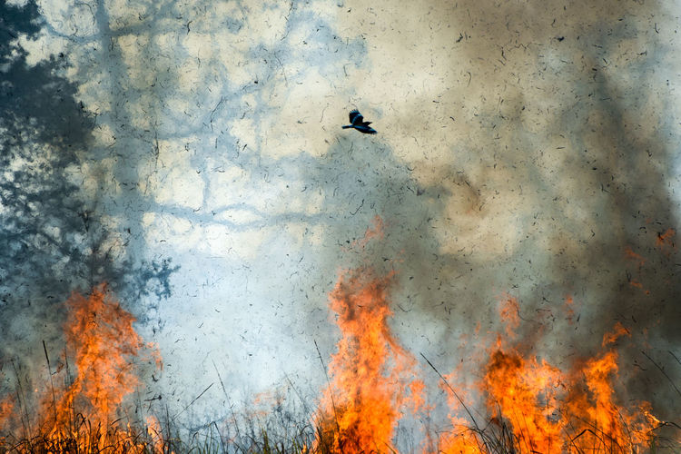 Close-up of forest fire