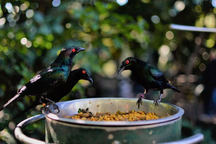 Close-up of birds feeding