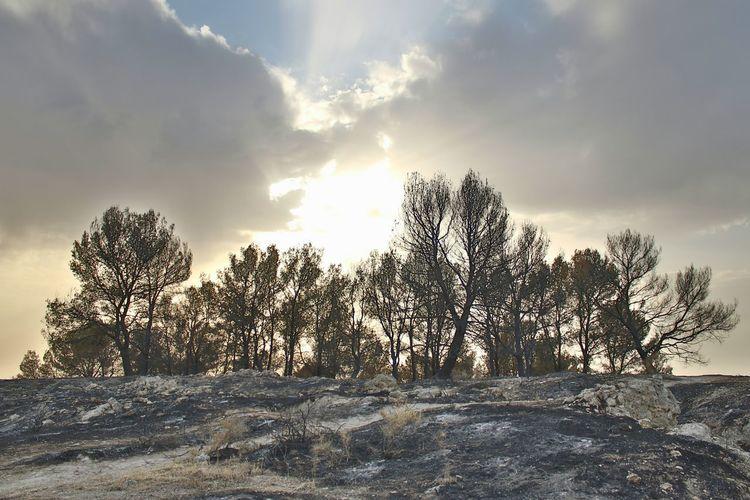 El llanto de la Tierra History Pensamientos Cielo Y Nubes  Nature Tree No People Day Fire Deforestation Dead Tree Historia Infierno  Fuego Triste Impresionante Naturaleza Paisaje Natural