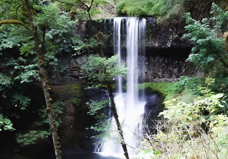 Waterfall Beauty Long Exposure Peaceful PNW Oregon Pacific Northwest  Silver Creek Falls Water Green Trees Serene Calming Outdoors