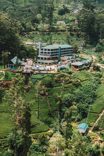 High angle view of houses in forest