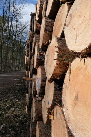 tree trunk EyeEm Selects Tree Trunk, Tree, Fallen Tree Tree Trunk