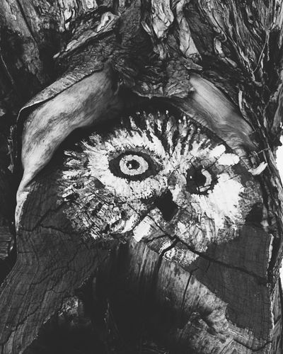 Owl Tree Paint Nature Rusty Chile♥ One Animal Animal Themes Nature Animals In The Wild Tree Tree Trunk Animal Body Part Animal No People Outdoors Animal Eye Day Mammal