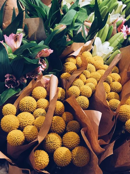 Yellow flower balls Floral Pattern Focus On Foreground Flowershop Freshness Spring Feelings Spring Is Coming  Gold Ball Floral Flourishing Overhead View Spring Flowers Bouquet Of Flowers Flower Bouquet  Golden Color Balls Ball Yellow Flower Variation Freshness Flower Market Choice No People Nature Fragility Day Outdoors Flower Head Beauty In Nature Close-up