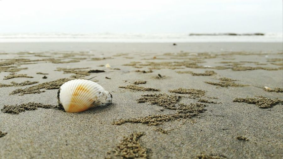 Close-up of seashell on sand at beach
