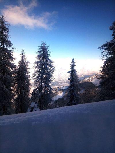 Landscape Austria Tirol  Tree Snow Cold Temperature Winter Snowing Pine Tree Sunset Sky