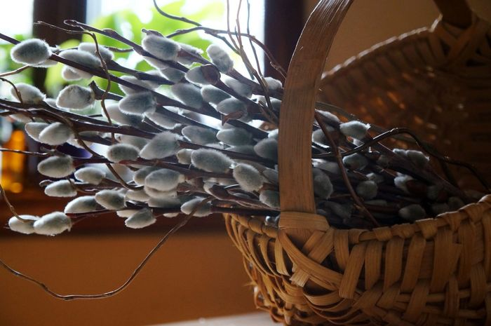 Basket Close-up Day Decoration Design Easter Ready Egg Basket Focus On Foreground Home Interior Indoors  Large Group Of Objects No People Pattern Plant Pussy Willow Salix Selective Focus Window X