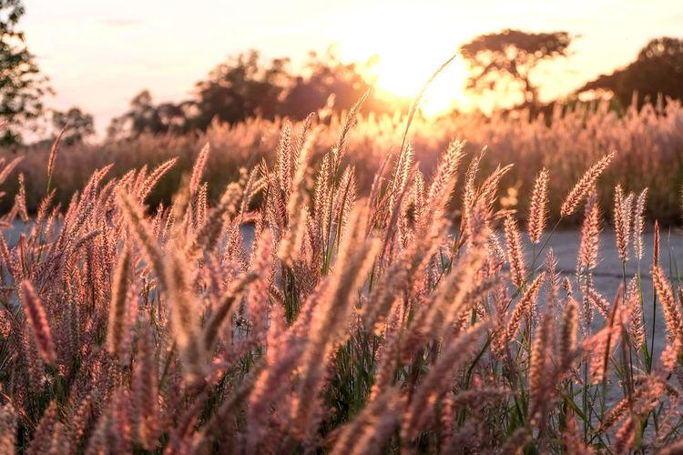 Grass field on