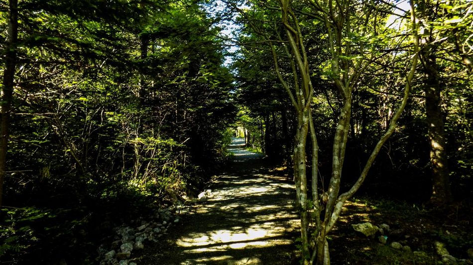 Beauty Blue Skies Canada East Coast Explore Nature Hiking Trail Landscapes Lush Greenery Nature Newfoundland Nikon D3200 Nikon D5100  Nikon L810 Outdoor Life Outdoor Photography Outdoors Saturday Afternoon Walk St. John's, NL Sunny Tranquil Scene Tranquility Tree Water Waterfall