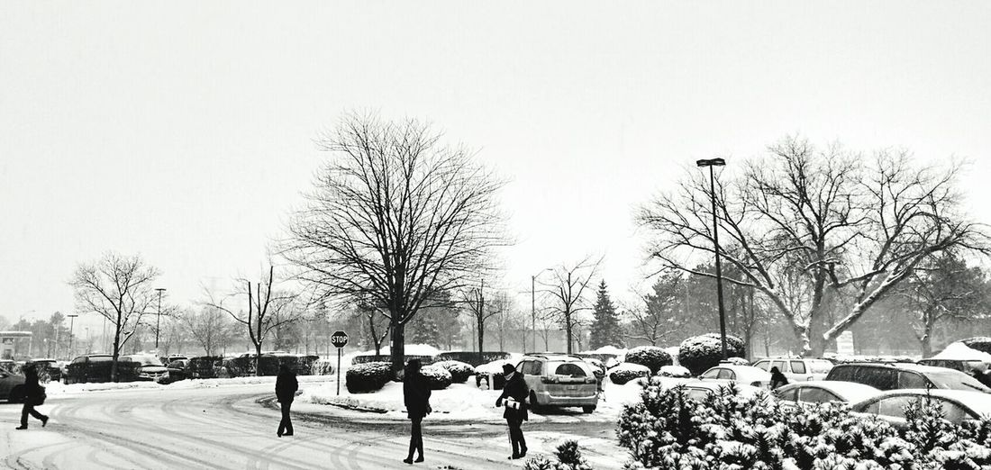 Flourish Canada Cold Winter ❄⛄ How's The Weather Today? Snowy Days... Where Do You Swarm?