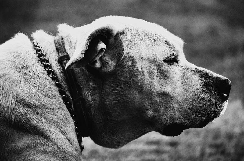 My Best Photo 2014 Blackandwhite NEM Black&white Streetphoto_bw Bws_worldwide Animals Shootermag WeAreJuxt.com AMPt_community Streetphotography