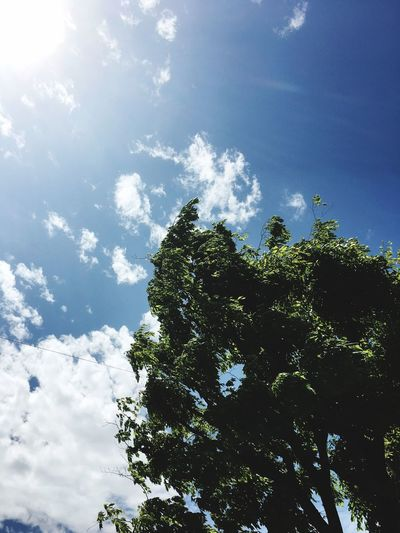 Tree Nature Beauty In Nature Sky Sky_collection EyeEm Best Shots Green Green Green!  Earysummer Sky_ Collection