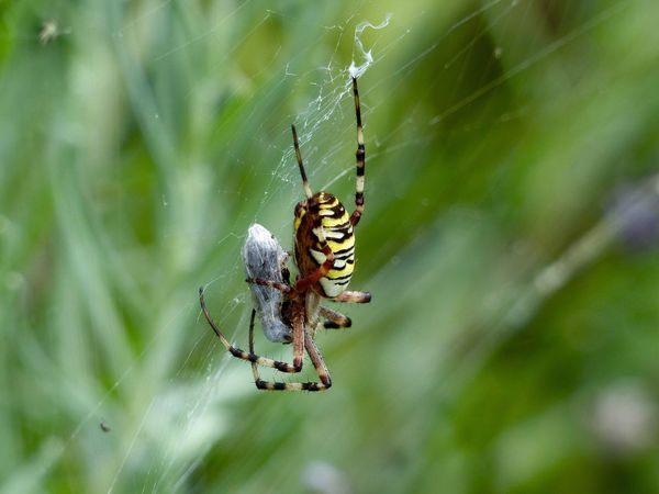 Spider Animals In The Wild Animal Themes Spider Web Insect One Animal Close-up No People Nature Animal Wildlife Day Web Outdoors