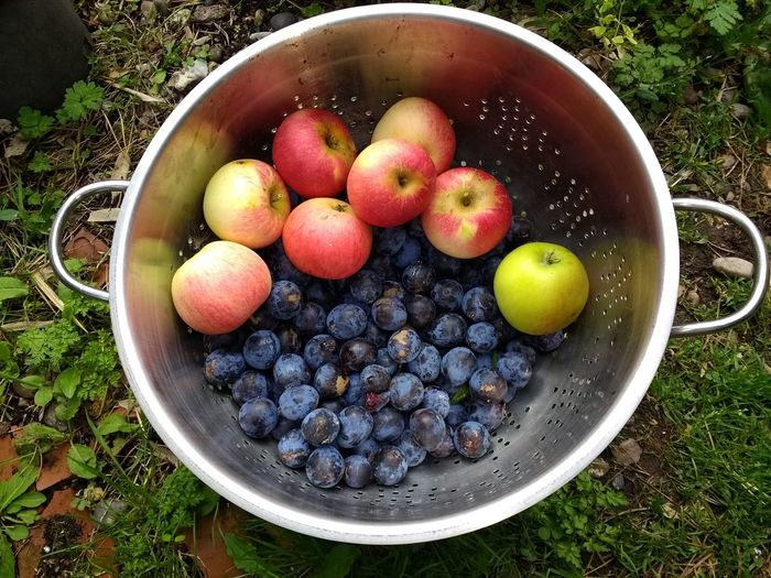 High angle view of apples in bowl on field
