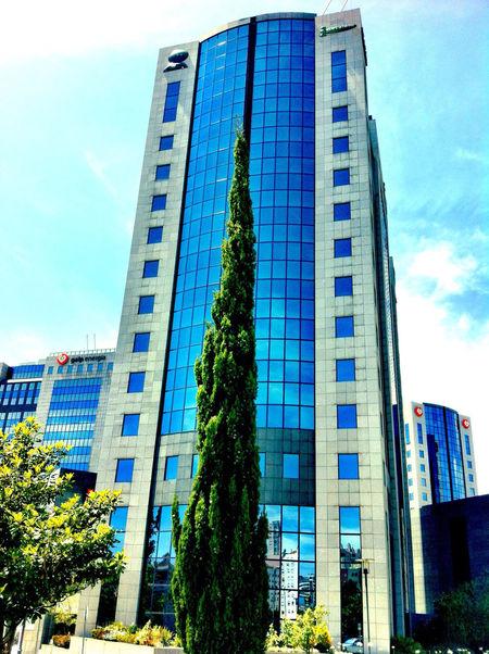 Tree Buildings