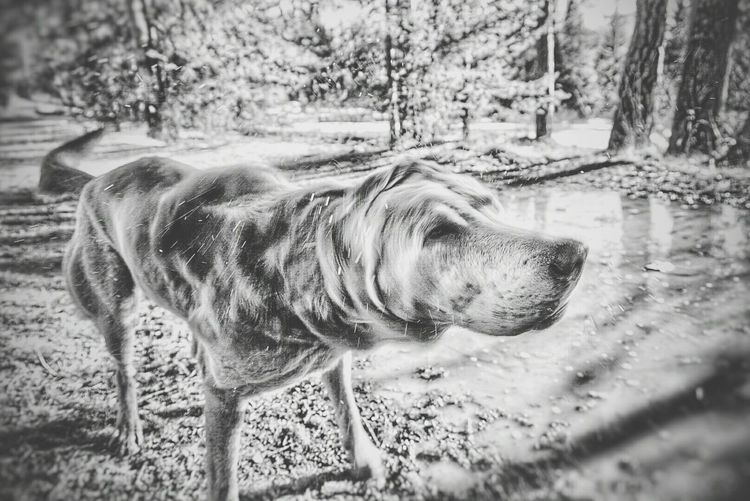 ShakeYourBody Shaking Taking Photos Monochrome Blackandwhite Sony A6000 SonyAlpha6000 Doginmove Dog DogLove The Great Outdoors - 2016 EyeEm Awards