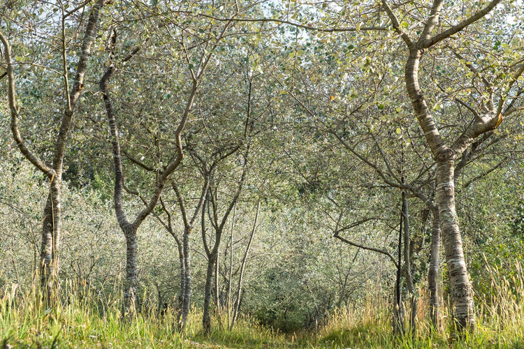Bosque Guanguiltagua Arboles Autumn Beauty In Nature Branch Day Forest Green Color Nature No People Outdoors Pichincha Scenics Tranquility Tree