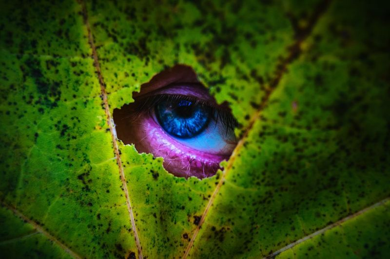 Selfie Eye Maximum Closeness Green Color Nature Close-up Beauty In Nature Eyesight Outdoors Eyeball Exceptional Photographs Our Best Pics By Ivan Maximov Open Edit From My Point Of View Focus Object Backgrounds Eyeem Photo Hole Pry Uniqueness BYOPaper! Live For The Story