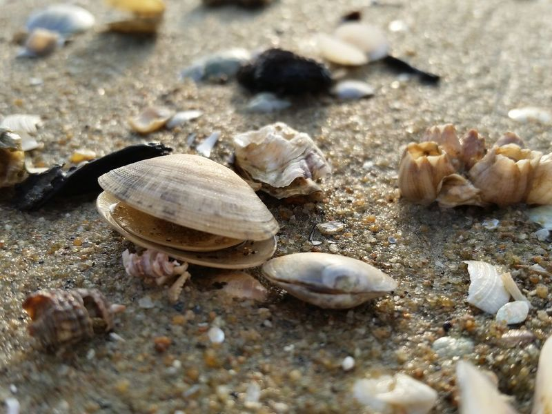 Sand Beach Animal Shell Seashell Shell Close-up Nature Hermit Crab No People Outdoors Animal Themes Day Pebble Clam Beauty In Nature Still Life