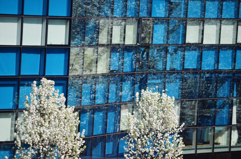 Amazing Architecture New York The High Line Squares Blue Spring Reflection Window Blue Wave Adapted To The City Windows Window Reflections