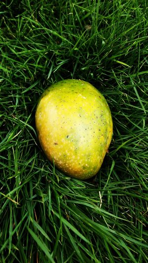 dropped mango pic Beutful Beutiful Fruits Yellow Fruit Close-up Grass Green Color Plant Life Green Lemon Tree Drop Water Drop Blade Of Grass Botany Leaf Vein Stem Woods Greenery Droplet RainDrop Young Plant Web Grassland Blossom Countryside Spider Web Dew