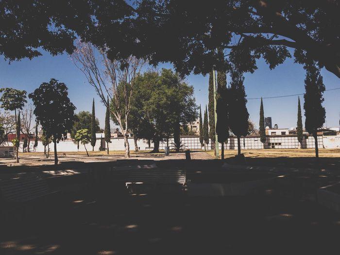 Descanso Relajación Momento Tarde  Jardin Jalisco Guadalajara Tree Outdoors Day No People Shadow Nature Sky