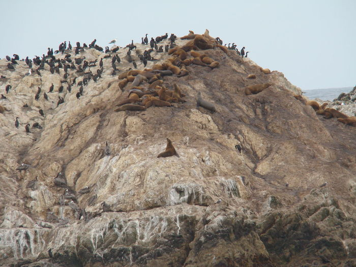 High angle view of seals and penguins on rocky shore