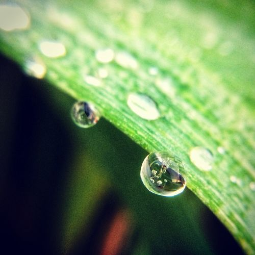 Close-up of water drop on leaf