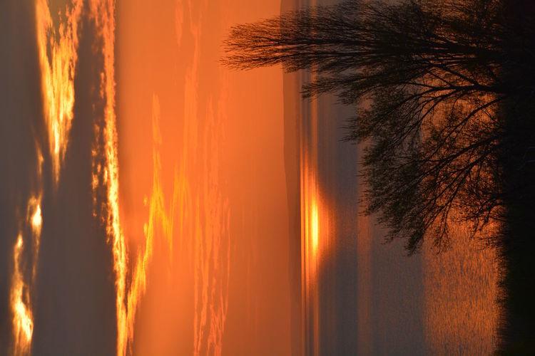 Orange Sky Sky