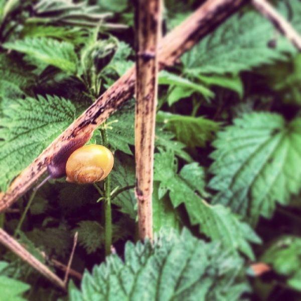 Schnecke Snail Nettle Brennessel nature Natur nice green grün klein little Wald forest