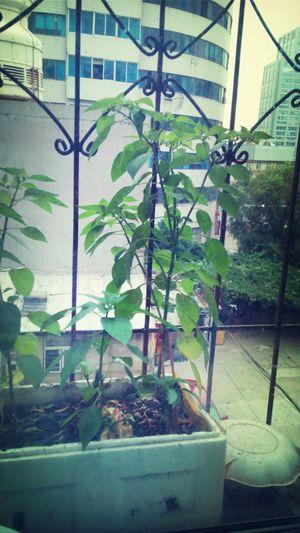 Near The Window Vegetables Photo Life *-*
