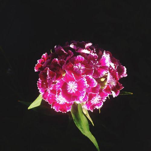 Plant Flowering Plant Vulnerability  Fragility Petal First Eyeem Photo