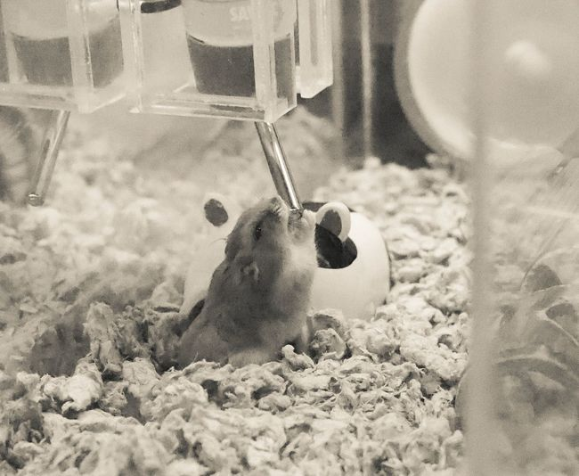Sand One Animal Animal Wildlife No People Animals In The Wild Beach Nature Day Mammal Animal Themes Outdoors UnderSea Water Close-up Hamster Love Hamster