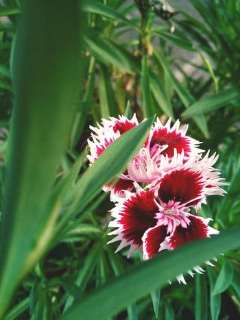 Flower Green Color Plant Nature Growth Beauty In Nature Day Petal Red