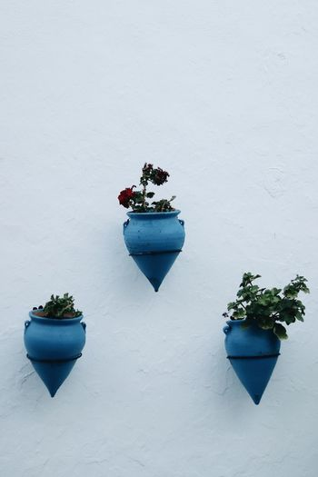 Small potted plant on snow covered wall
