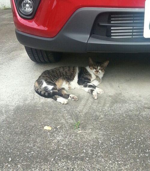 Cannot open eyes.so move tale.pupupu♪ Cat Sleeping Cat Close Eyes