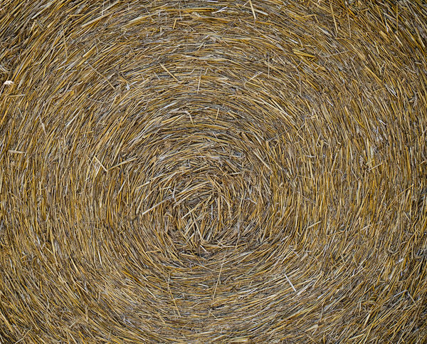 Straw bale after harvesting wheat field looks like a milky way galaxy system !.. Backgrounds Full Frame No People Close-up Nature High Angle View Textured  Directly Above Water Brown Outdoors Pattern Day Beach Land Shape Abstract Beauty In Nature Circle Milky Way Cosmos Flower Galaxy View