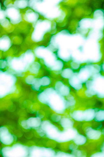 Blur green leaves with bokeh, abstract background BOKOH Backgrounds Beauty In Nature Close-up Day Defocused Green Color Nature No People Outdoors
