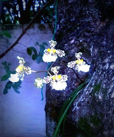 Exóticas,hermosas orquídeas del jardín de mi casa☺🌱🌷🌺 Paraguay-Asuncion Flowers,Plants & Garden Orquideas In My Garden Beautiful Nature Exotic Flowers