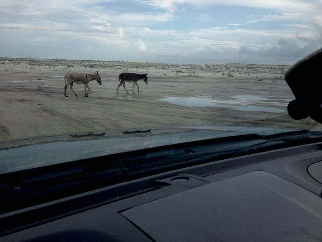 Dramatic Angles Jericoacoara - CE animal Ceará Beach Brasil Jegue Agrospeaking