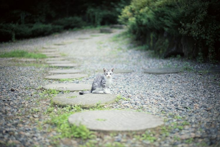 View of a cat on footpath