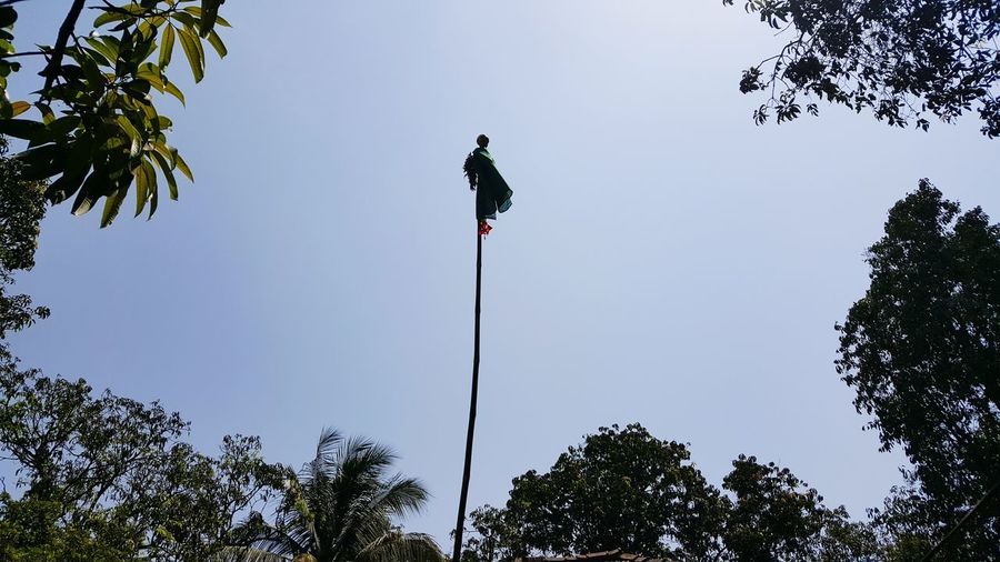 Low angle view of pole amidst trees against clear sky during gudhi padwa