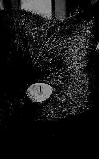 Gatto Gattonero Occhio Micio Biancoenero Nature Nature_collection Naturelovers Nature Photography Nature_perfection Naturephotography Blackandwhite Photography Black & White Blackandwhitephotography Cat EyeEm Best Shots Eye4photography  Eyeofcat Intenso Black And White Collection  BLackCat Black And White Portrait Bianco E Nero Gattoneroday
